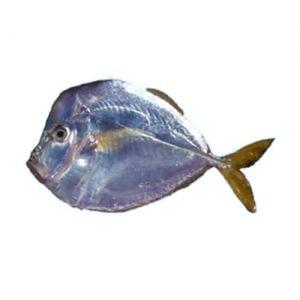 Moon Fish/Hiwas