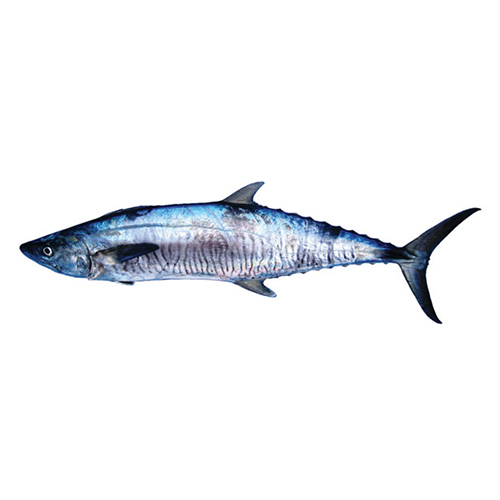Spanish Mackerel / Tanigue