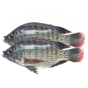 Tilapia (cleaned)