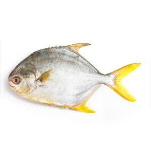 Pompano Fish (550-600g)
