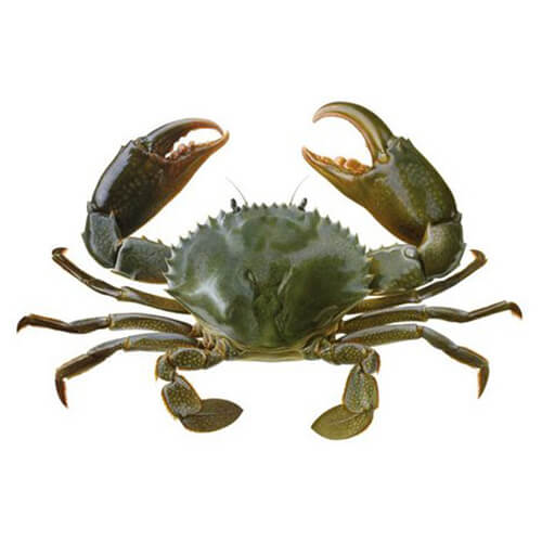 Crabs / Alimango