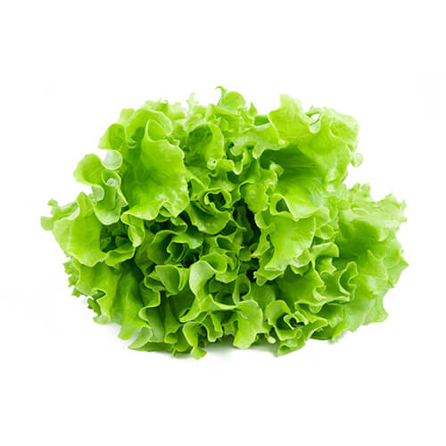 Lettuce / Litsugas