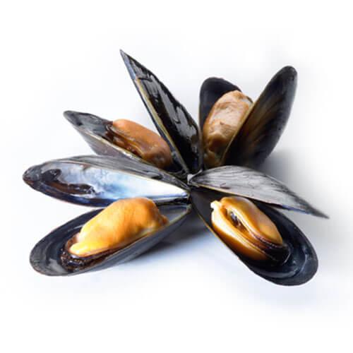 Mussels / Tahong