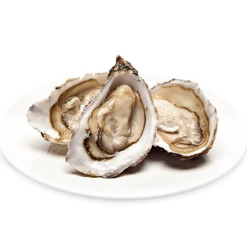 Oysters / Talaba